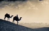 1329061860_monochrome_camels_w1