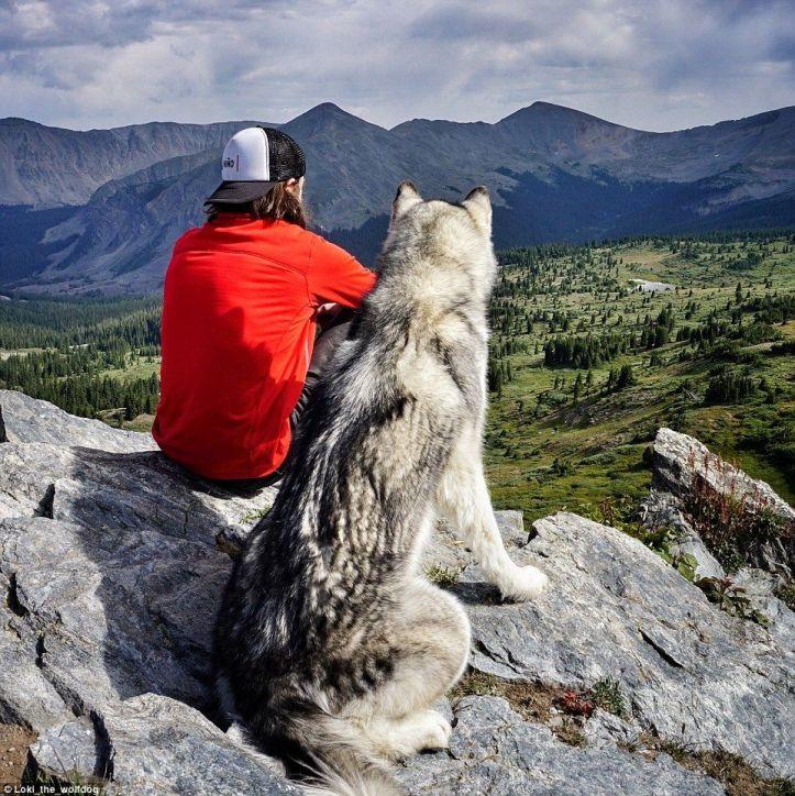 uomo e lupo